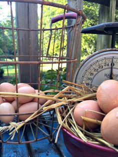 A basket full of farm fresh eggs.  www.Gardenchick.com