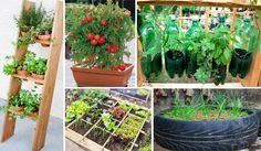 dicas-hortas-jardinagem