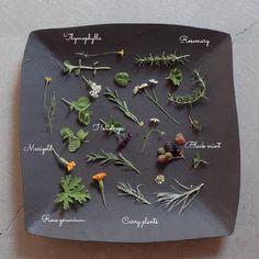 ハーブいろいろの画像 by Blumen Hutteさん ハーブのある暮らしフォトコンテストとボタニカルライフとフラワーアレンジメントとアレンジとToday's botanical (2015月8月2日) みどりでつながるGreenSnap