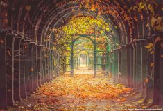 A Garden Tunnel In Peterhof Palace, St Petersburg, Russia Photography By: Andrew Korochkin