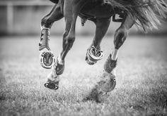 www.lacavalieremasquee.com | Horse by Philippa Davin