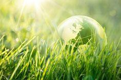 Startup agricole: bando di 11 milioni di euro alle piccole imprese green.