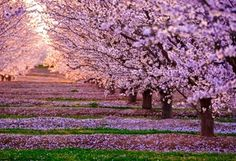 весна, цветение