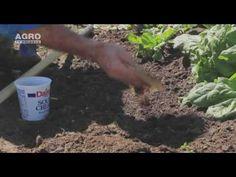 Zațul de cafea – o soluție pentru grădina ta - YouTube
