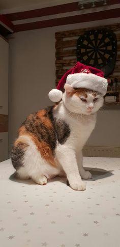 Elephants, Animals Beautiful, Kitty, Cats, Christmas, Kittens, Animales, Cutest Animals, Little Kitty