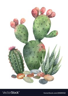 Watercolor vector collection of cacti and succulents plants isolated on white ba. - Watercolor vector collection of cacti and succulents plants isolated on white background. 4k Background, Fantasy Background, Plains Background, Background Vintage, Background Patterns, Cacti And Succulents, Planting Succulents, Cactus Plants, Watercolor Flowers