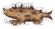 Sea Swine- German Legend: a sea monster spotted by sailors and described as having a hog's head, dragon's feet, sharp tusks, and eyes all over its body
