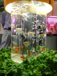 Furniture, 39 Adorable Fish Tank Ideas: Charming And Bright Tube Fish Tank Decoration Idea