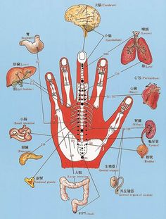 Reflexology Points, Hand Reflexology, Acupuncture Points, Healthy Mind And Body, Mind Body Spirit, Tai Chi, Physical Therapy, Yoga, Mindfulness