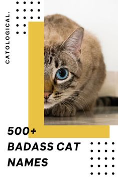 Give your cat a name that fits their big personality with this list of 500  of the best badass cat names! #CatNames #CatIdeas #CatTips #CatNameList Grey Cat Names, Cute Cat Names, Grey Cats, White Cats, Badass Cat Names, Unique Cat Names, Kitten Care, Cat Toys, Cat Breeds
