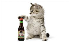 Who knew? There's wine for cats!  Gotta find some for bobby! :-). @iliveincanada this is awesome!