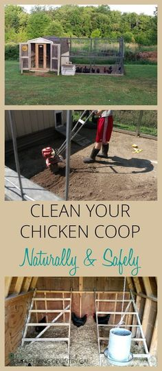 Chicken Coop - Learn how to clean your chicken coop naturally to promote a healthy flock that lays large abundant eggs year round. via /SLcountrygal/ Building a chicken coop does not have to be tricky nor does it have to set you back a ton of scratch. Chicken Barn, Chicken Coup, Best Chicken Coop, Backyard Chicken Coops, Building A Chicken Coop, Chicken Runs, Chickens Backyard, Chicken Life, Simple Chicken Coop