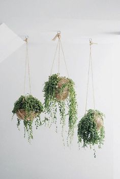 hanging houseplants deco ideas ampel plant potted plants