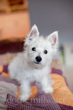 I'm obsessed with my westie puppy Lucy and she has her own blog/webpage