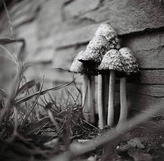 UGGGHHHH Mushrooms are so cute!
