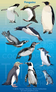 Penguins  Vector Clip Art by CleverVectors on Etsy, $3.95
