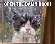 """""""OPEN THE DAMN DOOR!!  This Isn't A Game, Human"""" - Ha! ha!"""