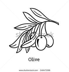 Vector sketch of olive tree branch. Line hand drawn style.