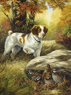 Both of my dogs are Britney Spaniels and they are both hunting dogs. I really en. Both of my dogs are Britney Spaniels and they are both hunting dogs. I really enjoy this picture because it shows th Wildlife Paintings, Wildlife Art, Animal Paintings, Animal Drawings, Quail Hunting, Hunting Art, Hunting Dogs, Pheasant Hunting, Tier Wallpaper