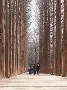 #Nami_Island, in #Chuncheon - #South_Korea http://directrooms.com/south-korea/hotels/chuncheon-hotels/price1.htm