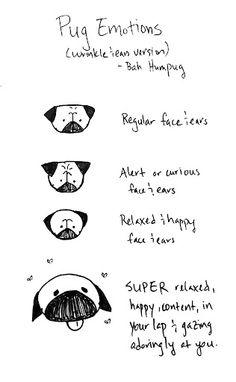 pug emotions!