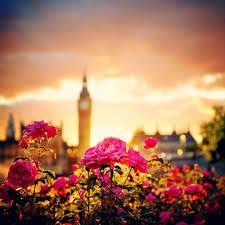 Rose Big Ben
