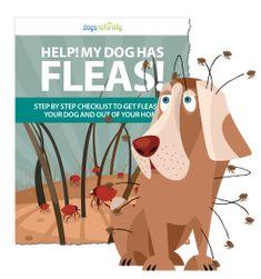 Help! My Dog Has Fleas!