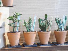 Les Succulents Cactus
