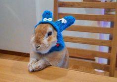 ウサギに冬の帽子を装備すると…:ハムスター速報