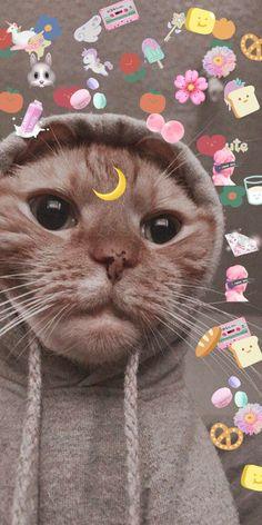 Wallpaper Gatos, Funny Cat Wallpaper, Cute Emoji Wallpaper, Cartoon Wallpaper Iphone, Bear Wallpaper, Animal Wallpaper, Cute Cartoon Wallpapers, Cute Baby Cats, Cute Cats And Kittens