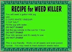 Weed killer recipe #gardens #tips