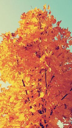 Colorful Autumn Tree Leaves #iPhone #6 #plus #wallpaper