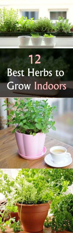 Indoor Vegetable Gardening Starting an indoor herb garden? Find out 12 best herbs to grow indoors. These… - Starting an indoor herb garden? Find out 12 best herbs to grow indoors. These are easiest to grow and require less care.