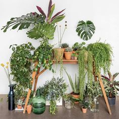 home. Green Revolution, Mini Gardens, Modern Planters, Plant Holders, Houseplants, Display Ideas, My Dream Home, Container Gardening, Indoor Plants