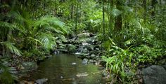 Daintree National Park in Far North Queensland, Australia, contains a 110-million-year-old rainforest, one of the oldest ecosystems on earth. The park is home to thousands of plant species and contains trees that are more than 2,500 years old.