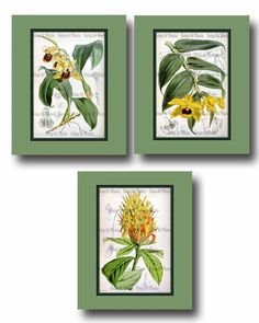 Victorian Flower Illustration Poster  Antique by VintageArtMasters