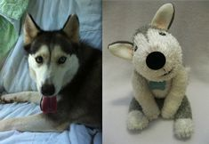 Sock dogs - custom made from a picture of your dog!  I must have 3!!