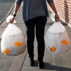 amazon, clever, cool, creative, industry, innovative, products,Goldfish Bin Bags