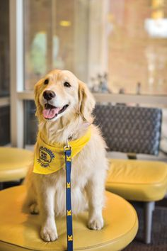 Dogs on Campus: Pet Therapy Program from Kent State University~ Photo Cred: Shane Wynn