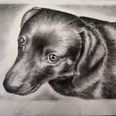 My friends dachshund in charcoal and pencil on watercolor paper #dogs #pets #artshow #art #artistsofinstagram #arts_help #art_public #artistic_dreamers #pencil #charcoal #artists_magazine #myart #proartist #photorealism #portrait Email me for commisions Scott.Edmiston@yahoo.com