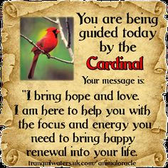 To get YOUR free message from the Animal Spirit Guides CLICK HERE ➡    http://www.tranquilwaters.uk.com/animaloracle      Which guide is with YOU today?                     #free #spiritguides #guidance #animalspiritguides
