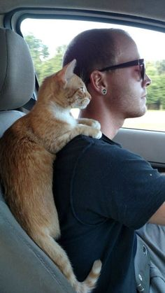 Safe and happy trips to you and your cat. Enjoy your kitchen … – funny cats Cute Cats And Kittens, I Love Cats, Crazy Cats, Cool Cats, Kittens Cutest, Baby Animals, Funny Animals, Cute Animals, Funniest Animals