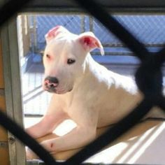 *URGENT!  RESCUE OR FUREVER HOME NEEDED FOR THIS SWEETIE!** Owners dump puppy at high kill shelter because she's deaf