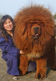 33 Of The Biggest Dogs In The World That Will Make You Speechless