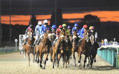 Twighlight at Dunstall Park Wolverhampton betting tips http://racingprofits.net