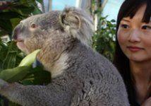 Taronga Zoo Sydney   Taronga Conservation Society Australia. Awesome place to go!