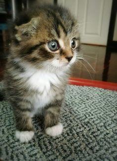 So sweet belove kitty Photo: niki