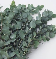 How to Grow Eucalyptus is part of Growing cut flowers - Enjoy our tips on how to grow Eucalyptus from seeds either as a houseplant, a perennial tree, or as an annual source for foliage for cut flower arranging Cut Flower Garden, Beautiful Flowers Garden, Flower Farm, Flower Gardening, Growing Flowers, Cut Flowers, Planting Flowers, Purple Flowers, Eucalyptus Plant Indoor
