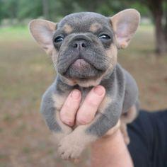 Cutie cutie cute cute!!!