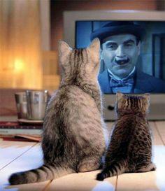 """-J'aime bien """"les cinq petits cochons"""" mais """"le chat et les pigeons"""" reste mon Agatha préféré""""!"""